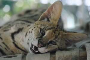 Harriet Serval smiles at the new Conservators Center blog. Photo by Kim Pyne.